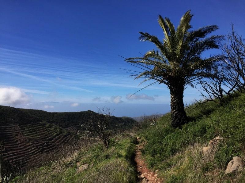 Bild-Weg-an-palmen-vorbei
