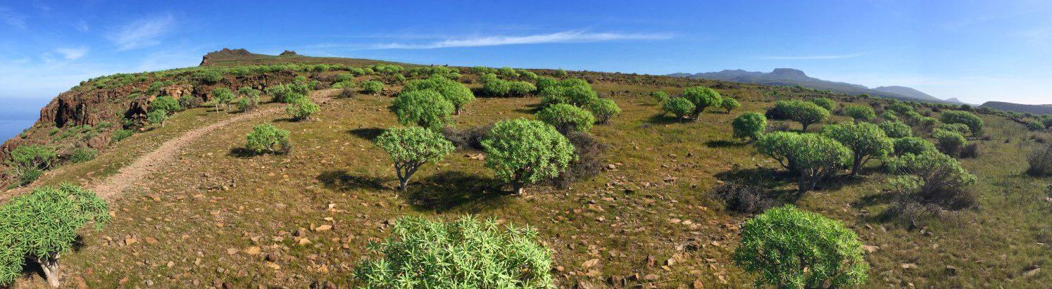 Hochebene oberhalb des Valle Gran Rey