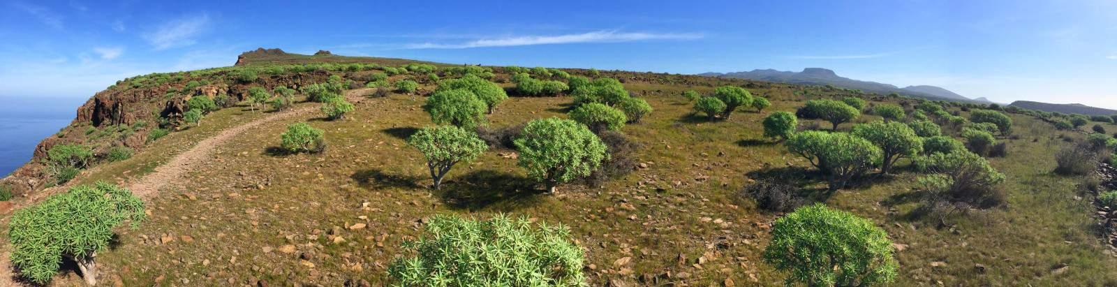 Plateau au-dessus de la Valle Gran Rey