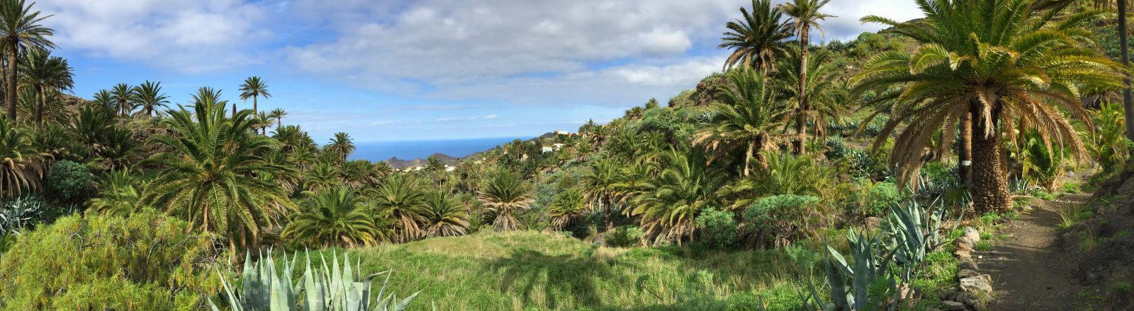 Paysage de palmiers à Alojera